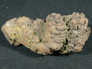A Big 100 Natural Crocodile Or Turtle Coprolite Fossil From Madagascar 273gr