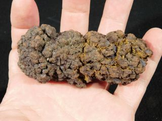 A 100 Natural Crocodile Or Turtle Coprolite Fossil From Madagascar 171gr