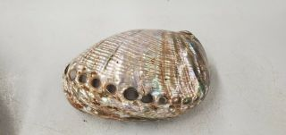 Vintage Abalone Iridescent Mother Of Pearl Sea Shell Polished