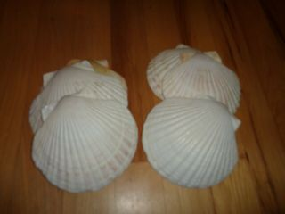 Vintage Set Of 6 Large Scallop Shells Cooking Serving Party Decor